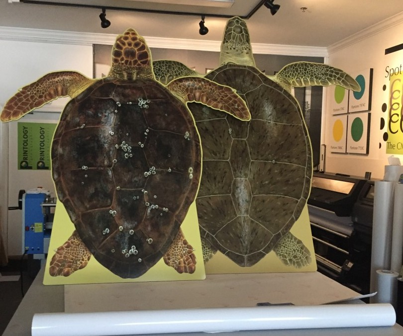 Turtle Cutouts Reach Museum Home