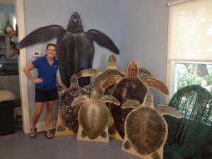 turtle cutouts; museum exhibit; turtle artifacts; Beaufort exhibits